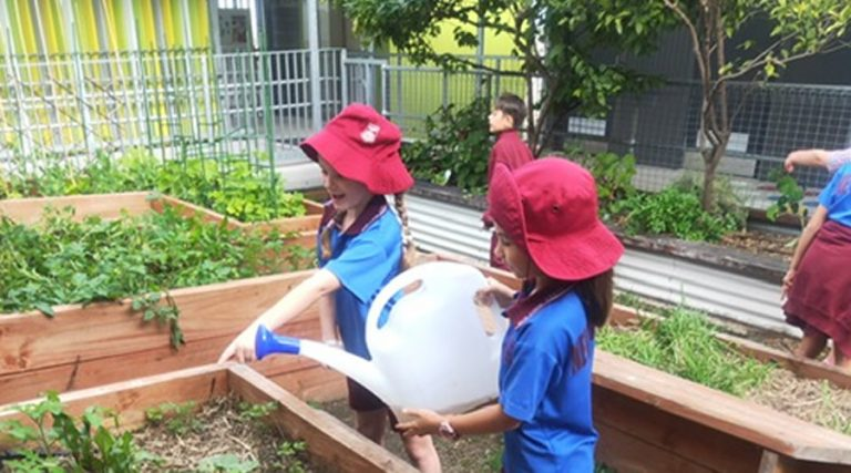 New Farm State School Gardening Club