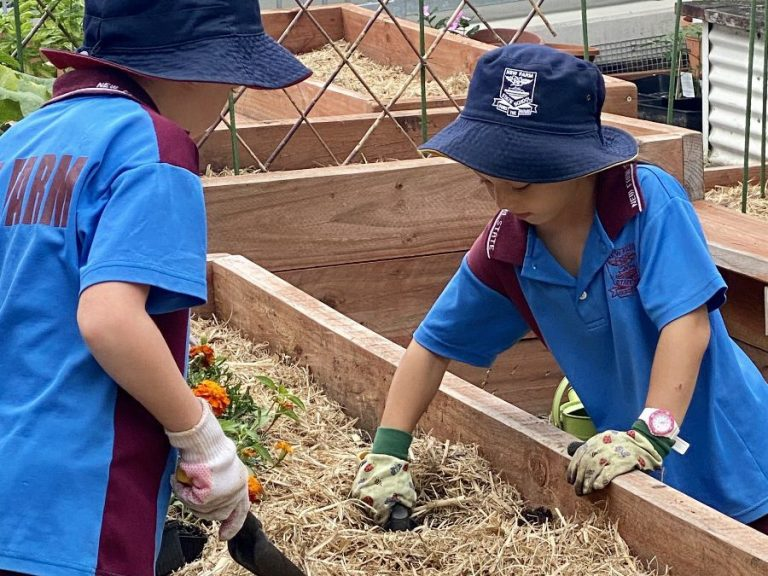 New Farm State School Little Patch Garden