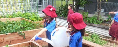 New Farm State School Gardening Club