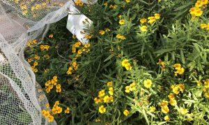 Garden Flower Bed at New Farm State School